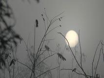 Sun in the fog stock video