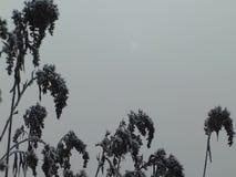 Sun in the fog stock video footage