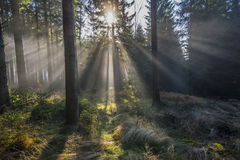 Sun and fog Royalty Free Stock Image