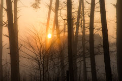 Sun and fog in the forest Stock Photos
