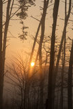 Sun and fog in the forest Stock Image
