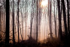 The sun through the fog illuminates the dark thick forest in the morning_ royalty free stock photo
