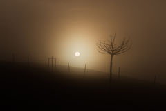 Sun through fog Royalty Free Stock Images