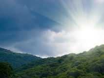 Sun and forest Royalty Free Stock Photography