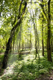 Sun in forest Stock Photo