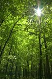 Sun in forest royalty free stock photography