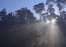 Sun in forest. Through fog royalty free stock photos