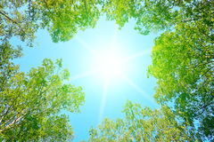 Sun into a forest Stock Image