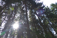 Sun in Forest. Minimum hdr used - sunshines and lens beam Stock Photography