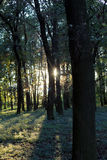 Sun in the forest Royalty Free Stock Photography
