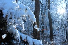 The Sun and The Forest With Snow stock image
