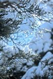 The Sun and The Forest With Snow royalty free stock images