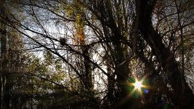 The Sun In The Forest stock footage