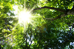 Sun and forest trees Royalty Free Stock Photos