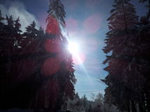 Sun. Forest, Wald, blue sky Stock Photo