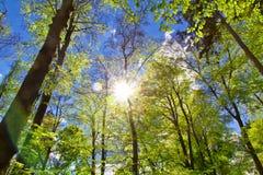 Sun in foresta Fotografia Stock