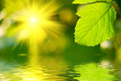 Sun in foresta Immagini Stock Libere da Diritti
