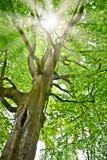 Sun in foresta profonda Fotografia Stock Libera da Diritti