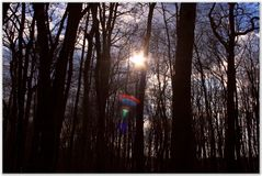 Sun in the forrest. Sun play with color in the forrest stock photography