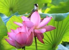 Sun-Fotografieenthusiast-Lotosteich-Seitenwartezeit auf Vögeln und Blumen Lizenzfreies Stockbild