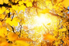 The sun framed by yellow foliage in autumn royalty free stock images