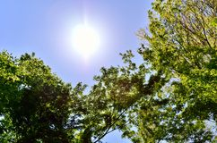 Sun and fresh green. Stock Image