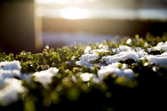 Sun on frost. Sun on icy vegetation with morning sunlight Royalty Free Stock Images
