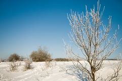 The sun, frost, snow, hoarfrost. Royalty Free Stock Images