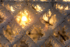 Sun with frozen fence. Royalty Free Stock Photos