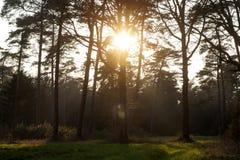 Sun gazing in european forest background wallpaper fine art. Prints royalty free stock photos