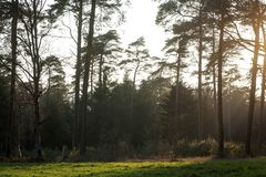 Sun gazing in european forest background wallpaper fine art. Prints royalty free stock images