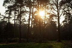 Sun gazing in european forest background wallpaper fine art. Prints royalty free stock photography