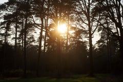 Sun gazing in european forest background wallpaper fine art. Prints stock photography