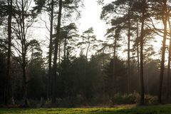 Sun gazing in european forest background wallpaper fine art. Prints royalty free stock image