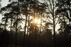 Sun gazing in european forest background wallpaper fine art. Prints royalty free stock photo