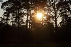 Sun gazing in european forest background wallpaper fine art. Prints stock image