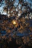 Sun geht Abflussrinnenbaum Lizenzfreie Stockfotografie