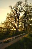 Sun geht unten hinter den Baum Stockbild