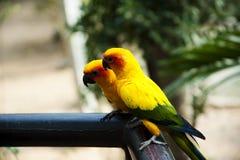 Sun Genoa Court Bird Image libre de droits