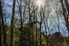 The sun glances through the trees. The sun glances through the tall trees in the mountains Stock Photos