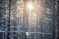 Sun-Glanz durch Bäume stockfotografie