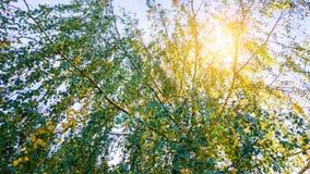 Sun-Glanz durch Baum Stockbild