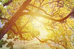 Sun-Glanz durch Baum des Waldes stockbild