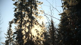 Sun-Glanz durch die Baumaste umfasst mit Schnee stock video footage