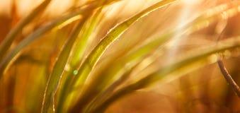 Abstrakter Gras-Hintergrund Stockfoto