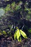 Sun glare in foliage stock image