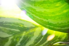 Sun glare on the leaves. Soft focus stock images