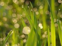 Sun glare Stock Photography