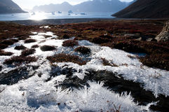 Ice crystals - Scoresbysund Fjord - Greenland Stock Image