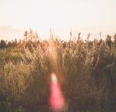 The sun glare stock photography